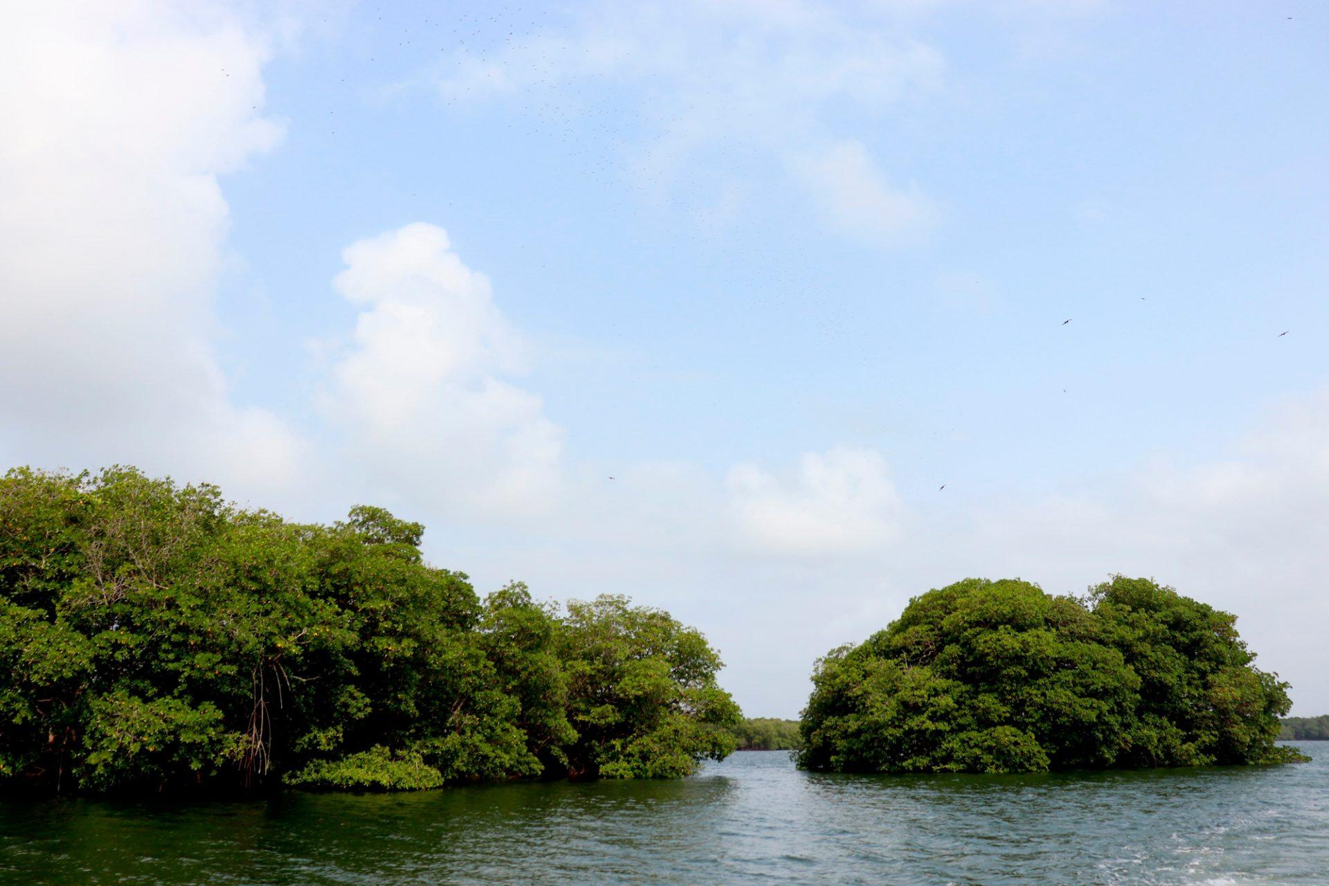 Ensenada de Rio negro, Necocli